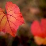 Se nos acaba el otoño…