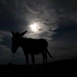 El burro y el contraluz