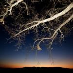 El árbol y la puesta de sol