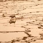 Alentejo: el perro en el mar