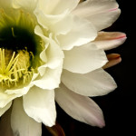 Media flor ¿imagen completa?