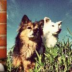 Los perros de Instagram con mejores fotografías
