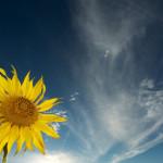 Girasoles, contraluz y un flash: sacando partido a lo que queda del día