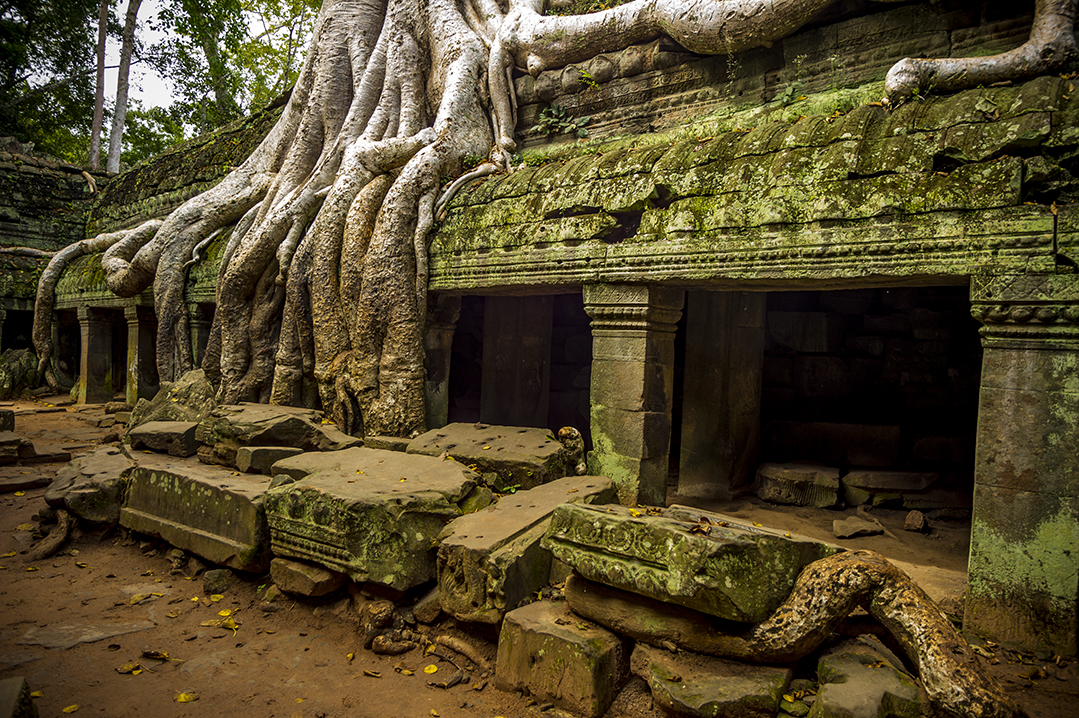 Ta Prohm, Camboya.         © Alberto Honing